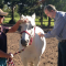 ross river virus in horses pac vets