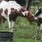 mare fertility equine health